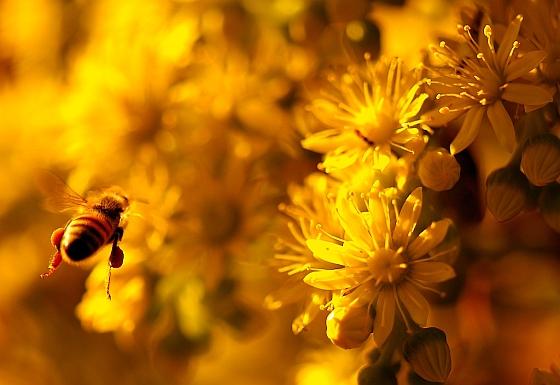 Bijen neonicotinoïden