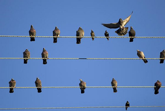Birds on the wire