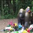 Dierenexperts bekritiseren dood van gorilla Harambe