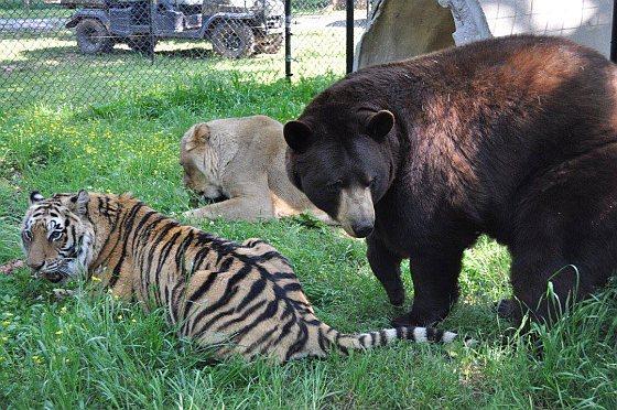 BLT - dierenvriendschap