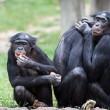 Onderzoek naar bonobopersoonlijkheden