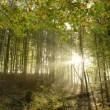 Bomen planten vanuit je luie stoel