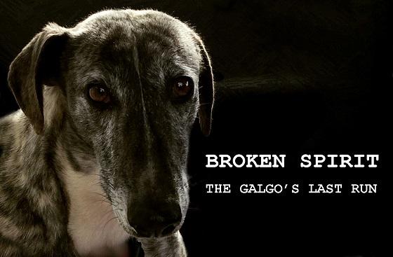 Galgo's