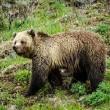 #GNvdD: Dertien beren proeven voor het eerst vrijheid