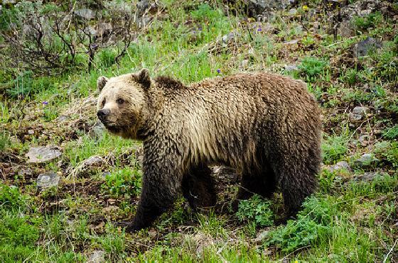 dertien beren