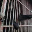 """""""Ergste dierentuin ter wereld"""" sluit deuren"""