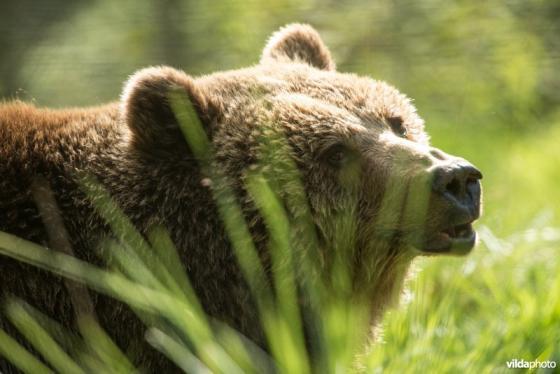 moederberen