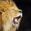 Onderzoek: mensen kunnen emoties in dierengeluiden herkennen