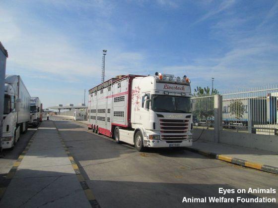 veetransport buffels