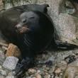 Zeeleeuwen op dodenlijst
