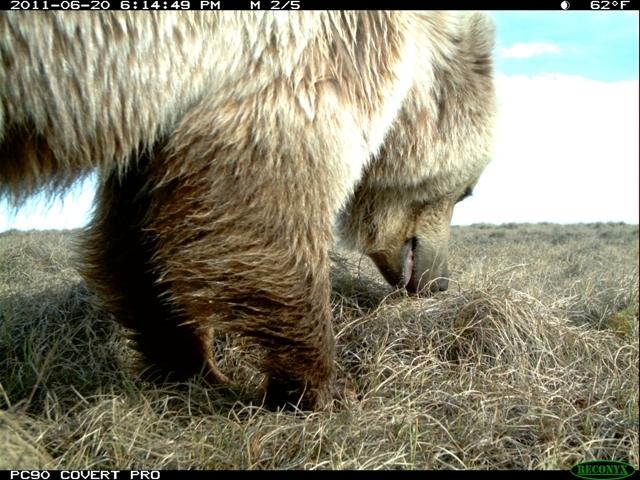 Camera 3 beren