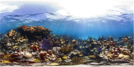 Caribbean reefs today