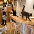 Het kattencafé: koffiedrinken tussen twintig katten
