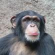 Nieuwe feiten over leermogelijkheden dieren