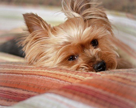Chip -en registratieplicht honden