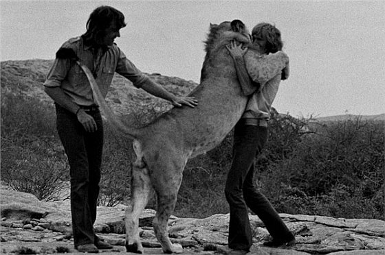 Christian the Lion