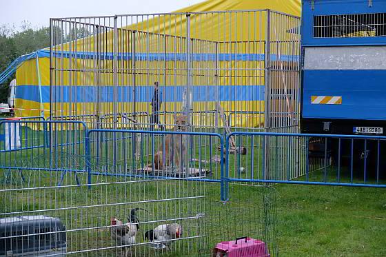 Circus Renz Berlin -hoogte kooi-leeuwin