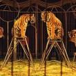 circussen met dieren