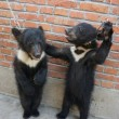 Video: circusdieren mishandeld