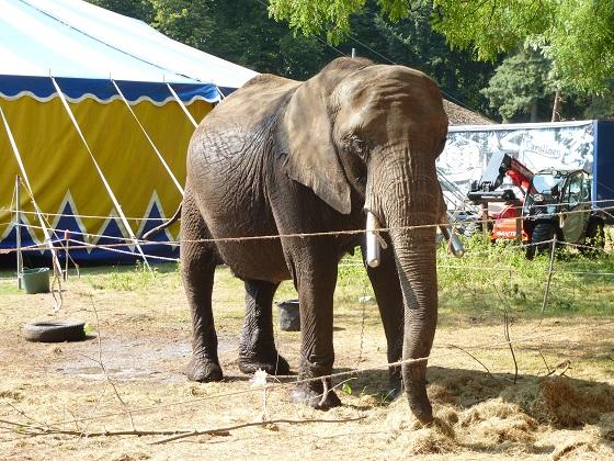 circus Freiwald