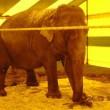 Brandbrief: 'Verbod = verbod' van wilde dieren in circus