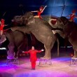 #GNvdD: Dublin verbiedt circussen met wilde dieren
