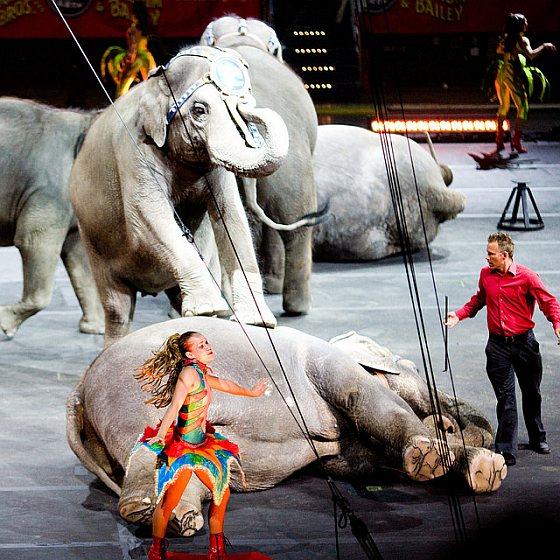 Circussen met wilde dieren