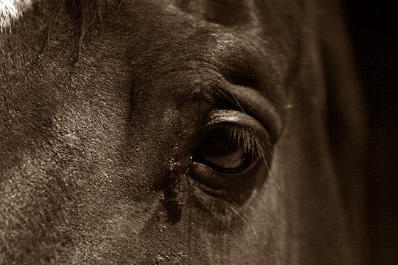 paarden mishandeld