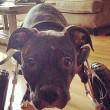 #GNvdD: Pup zonder voorpootjes wordt ster op Instagram