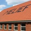 #GNvdD: Poezen Stichting Melief hebben weer dak boven hoofd!