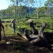 #GNvdD: Jonge olifant gered uit irrigatiegeul
