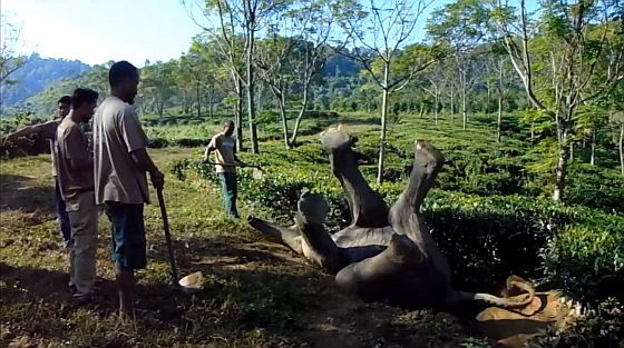 De onfortuinlijke olifant - jonge olifant