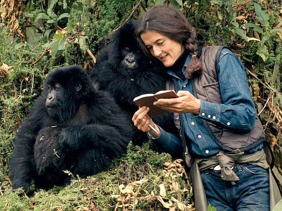 Dian Fossey - virunga