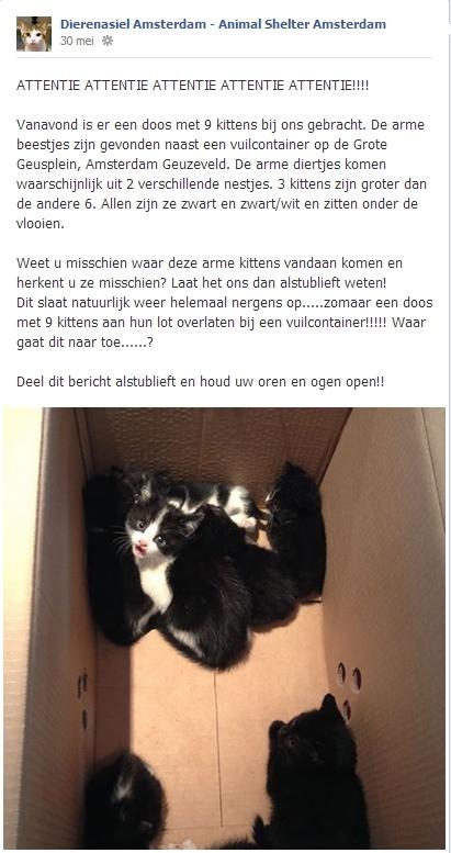 Dierenasiel Amsterdam Facebook