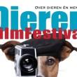Maarten Reesink: Dieren, filmfestival, tv-college
