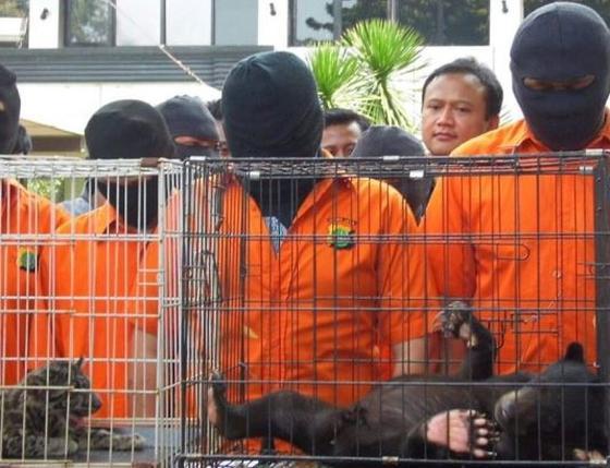 dierensmokkelaars