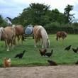 #GNvdD: Dierenopvang Savanah vindt nieuwe locatie