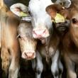 Petitie: Stop de gruwelijke transporten van dieren vanuit de EU naar Turkije!