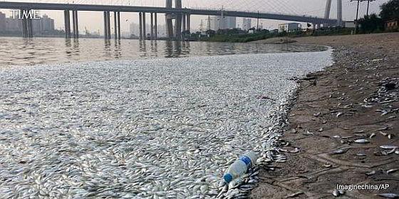 Dode vissen Tianjin