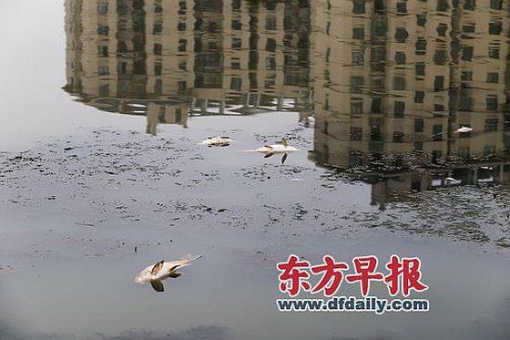 Dode vissen