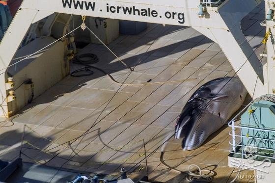 walvisvaartcommissie