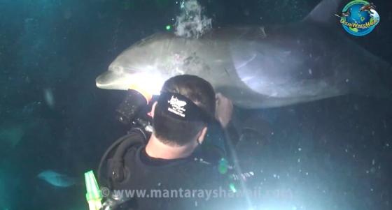 dolfijn gered door duikers