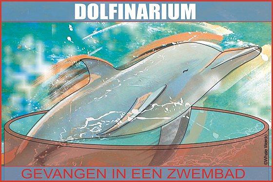 Dolfijn in dolfinarium