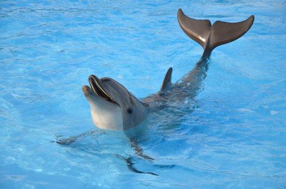 Dierenbeschermingsorganisaties verzoeken ioc dolfijnmisbruik winterspelen te voorkomen animals - Foto van de show ...