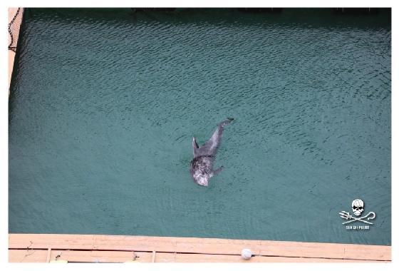 dolfijnenjacht in Taiji