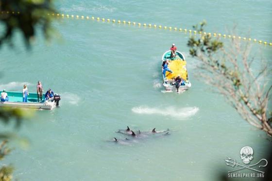 dolfijnslachtseizoen