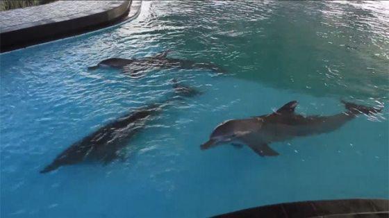 Bali - tandloze dolfijnen
