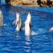 ProWal demonstreert tegen dolfijnen in dolfinaria