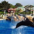 Griend Bubbles overlijdt in SeaWorld