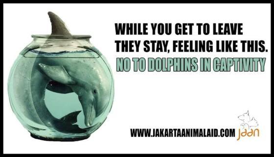 Dolfijnen in gevangenschap - tandloze dolfijnen